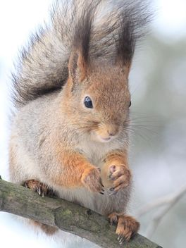 Squirrel on a branch - image #304503 gratis