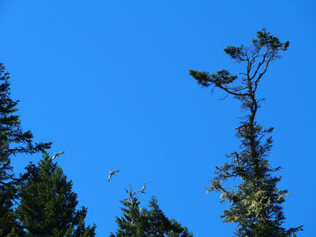 Birds flying in the sky - Free image #305673