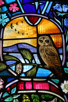 Local Wildlife - stained glass window, Dornoch Cathedral #1 - бесплатный image #306033