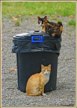 mare i fill, gats rodamons 01 - madre e hijo, gatos vagabundos - mom and son, street cats - image #306113 gratis