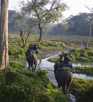 Elephant Ride at Jaldapara Wildlife Sanctuary! - image gratuit #306173