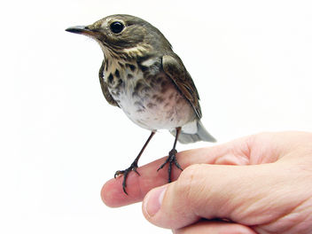 A Bird in the Hand - image gratuit #306193