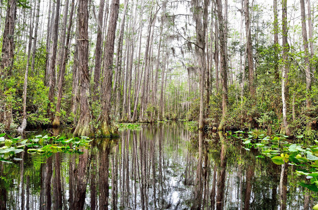 Swamp on the way out. Blackwater. - image gratuit #306783