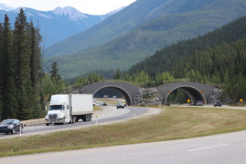 Trans Canada Highway - Free image #306943