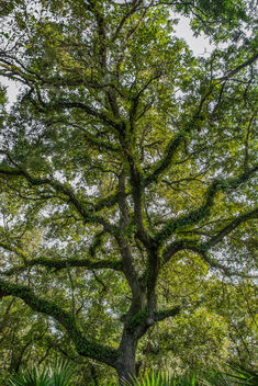 Beautiful form of tree branches with ivy around. - image gratuit #306993