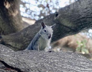 Here's Lookin' at You, Squirrel 10-26-14 - image gratuit #307023