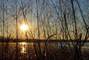 marsh grass in sunlight - image gratuit #307103