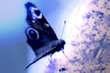tender butterfly - Free image #307513
