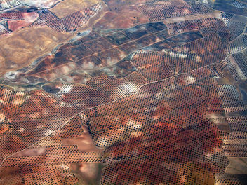 Newly planted olive groves south east of Madrid - бесплатный image #309623