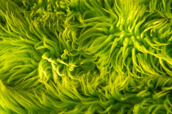 lime green shag rug texture - image gratuit #310813