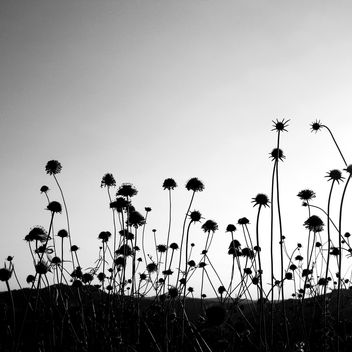 flowers silhouette texture bw - Free image #310973