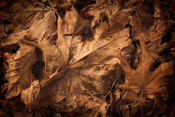 teXture - Dead Leaves - Kostenloses image #311913