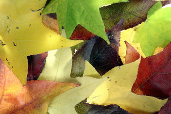 Autumn Leaves 3 - image gratuit #312733