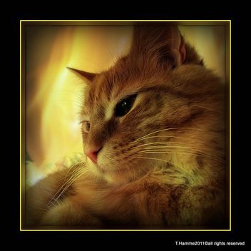 Cats never strike a pose that isn't photogenic. :) - Free image #322963