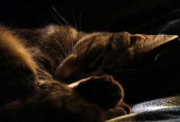 Let sleeping kitties lay... - image gratuit #323663