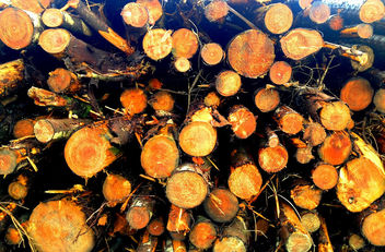 Black Mountain Woodpile #dailyshoot #Wales #iphone - image gratuit #323983