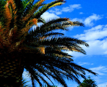 Loving the Blue Sky Christies Beach SA #Adelaide #leshainesimages - Kostenloses image #324133