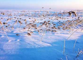 Field covered with snow - бесплатный image #326503