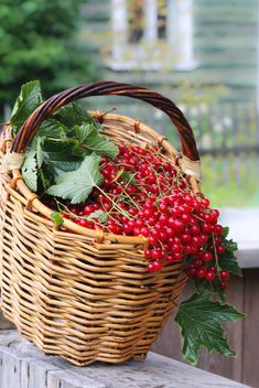 Red currants in a basket - image gratuit #327893