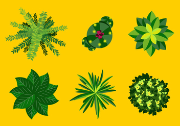 Vector Plant Top View - vector gratuit #327983