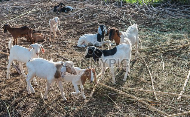 goats on a farm - Free image #328113