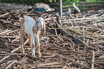 goatling on a farm - image #328123 gratis