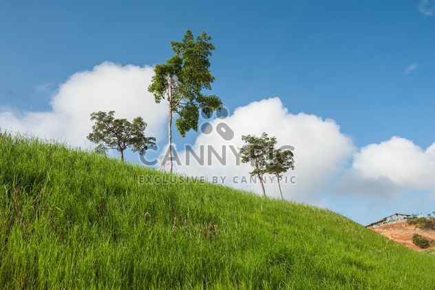 Green Slopes - image gratuit #328133
