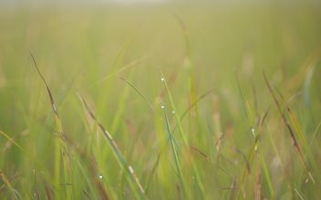 dew on grass - image gratuit #328153