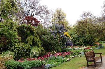 Blooming bushes in Hyde park, London - image gratuit #328413