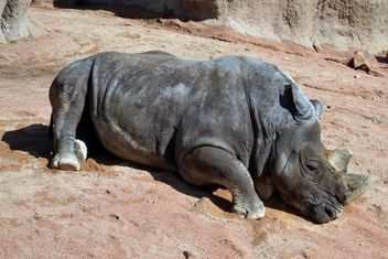 Rhino resting lying on the ground - image #328543 gratis