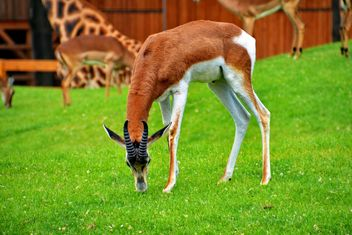 antelope in the park - image #328643 gratis