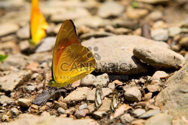 Butterfly on the rocks - image gratuit #328663