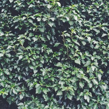 Green bush as background - image gratuit #329113