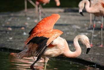 Flamingo in park - Free image #329933