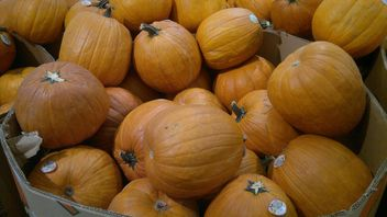 Pile of Pumpkins - Free image #330443