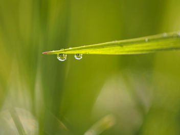 morning dew - image gratuit #330643