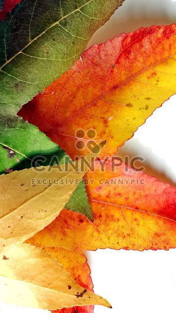 Autumn foliage - Free image #330953