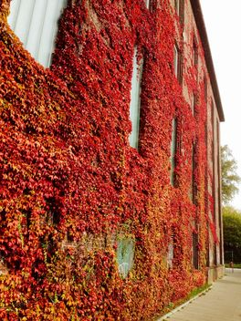 Autumn foliage on facade of the building - Free image #330973