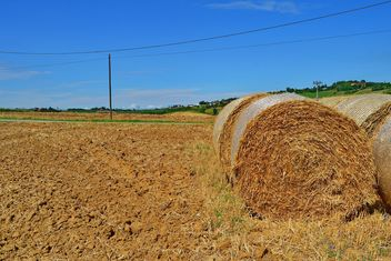 Haystacks, rolled into a cylinders - image gratuit #334743