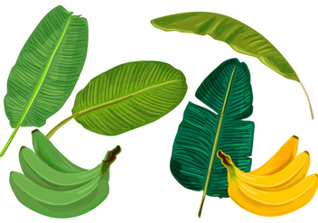 Banana Leaves Vectors - бесплатный vector #335283