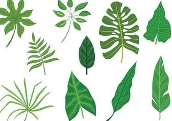 Free-Tropical-Leaves-Vectors - Kostenloses vector #335313