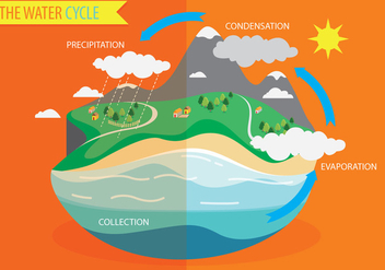 Water Cycle Diagram Vector - бесплатный vector #335543
