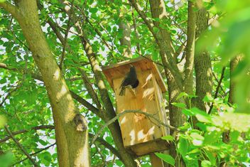 Starling on nesting box - image gratuit #337553