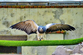 Bird of prey in zoo - image #337813 gratis