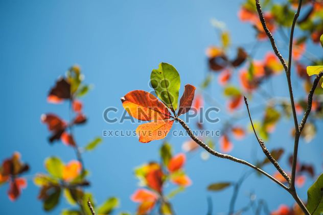 Colorful leaves on tree branches - Free image #338603