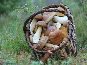 Basket of white mushrooms - Free image #339173