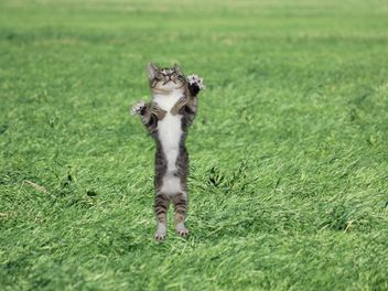 Grey kitten on green grass - image gratuit #339193