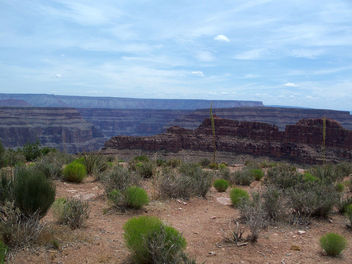 USA (Grand Canyon, AZ) Desert plants and magnificient canyon landscape - бесплатный image #341223