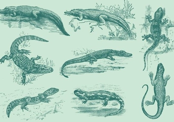 Lizards And Gators - Free vector #341893