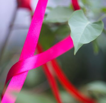 Pink ribbon on a plant - бесплатный image #342093